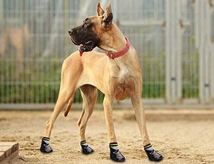носки собак