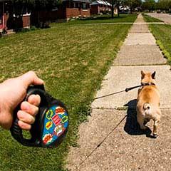 рулетка для собак