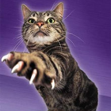 царапины кошек