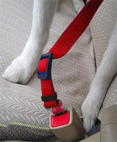 поводок в машину для собак