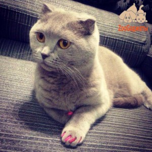 кошка антицарапки