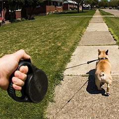 рулетка собак