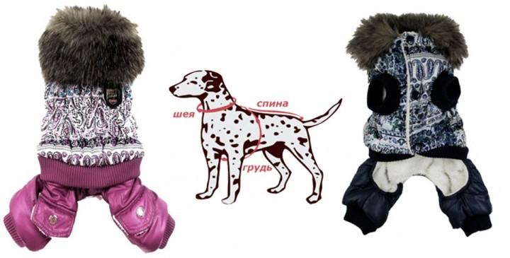 Одежда собак