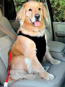 ремень безопасности собак