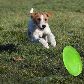 летающая тарелка собак
