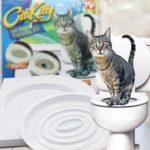 кошка на унитаз