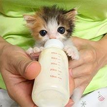 бутылочка кошек