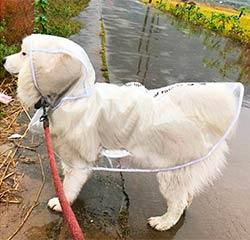 дождевик собак