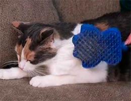 глайдер для кошек