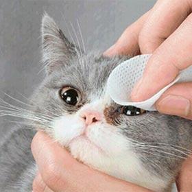 очищающие влажные салфетки для кошек