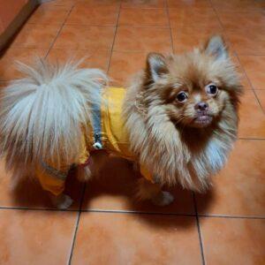 дождевик грязевик для собак