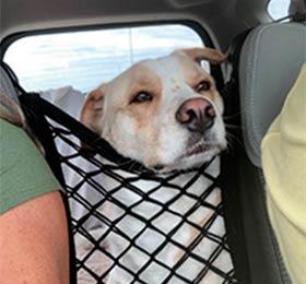 сетка для животных в машину