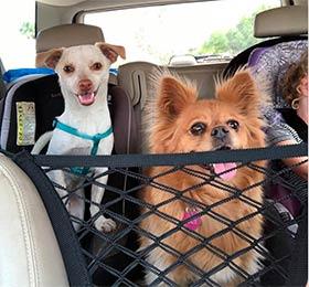 автомобильная сетка для собак